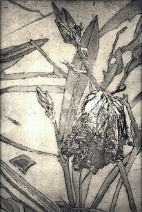 Radierung, Druckgrafik, Schwarz weiß, Blüte