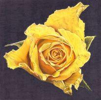 Blüte, Rose, Blätter, Gelb