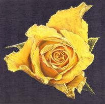 Rose, Gelb, Pflanze, Blüte