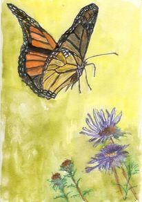 Natur, Schmetterling, Blumen, Tiere
