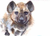 Tiere, Lebewesen, Natur, Hyäne