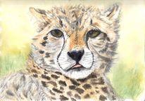Gepard, Lebewesen, Fell, Nase