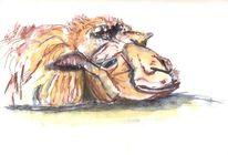 Tiere, Wolle, Augen, Kamel
