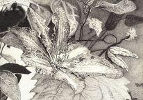 Tusche, Blüte, Natur, Zeichnung
