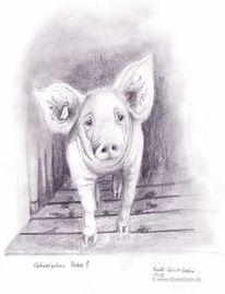 Schweineporträt, Schwein, Bleistiftzeichnung, Massentierhaltung