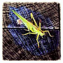 Digitale kunst, Insekten, Gruß