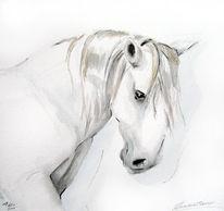 Pferde, Lusitaner, Portugal, Aquarell