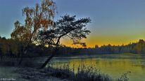 Frost, Baum, See, Fotografie