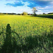 Himmel, Butterblumen, Feld, Fotografie