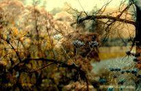 Baum, Wasser, Strauch, Blumen
