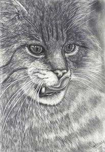 Katze, Zeichnung, Bleistiftzeichnung, Tiere