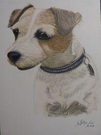 Buntstifte, Hundeportrait, Buntstiftzeichnung, Portraitzeichnung