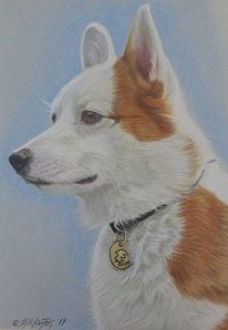 Hundezeichnung, Haustier, Polychromos, Hundeportrait
