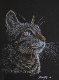 Katzenzeichnung, Polychromos, Tiere, Zeichnung