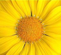 Genuss, Blumen, Leidenschaft, Realität