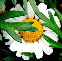 Fotografie, Weiß, Inspiration, Natur