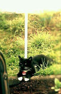 Sommer, Katze, Sonne, Fotografie