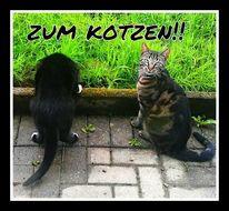 Katze, Kotze, Fotografie
