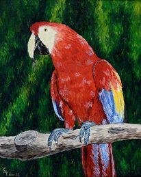 Leinen, Papagei, Ölmalerei, Malerei