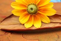 Zeitlos, Kraft, Blumen, Emotion