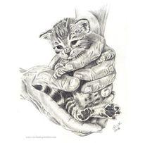 Katze, Bleistiftzeichnung, Zeichnung, Schwarz weiß