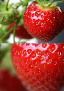 Rot, Fotografie, Früchte, Erdbeeren
