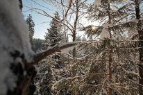 Fotografie, Wald, Winter, Licht