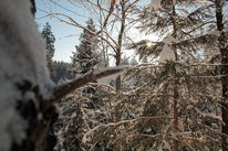 Wintermorgensonne im Wald