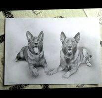 Bleistiftzeichnung, Papierwischer, Schäferhunde, Hund