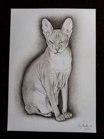 Zeichnung, Bleistiftzeichnung, Katze, Realismus