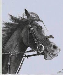 Portrait, Pferde, Reiten, Wind