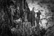 Pflanzen, Schwarzweiß, Totholz, Baum