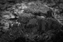Baum, Abstrakt, Schwarzweiß, Pflanzen