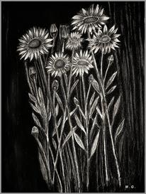 Schwarz weiß, Schwarzweiß, Blumen, Pflanzen