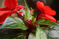 Flora, Blüte, Macroaufnahme, Fotografie