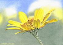Sommer, Blumen, Zeichnungen