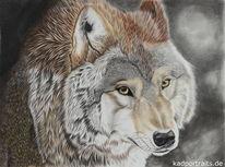 Wolf, Buntstiftzeichnung, Tierwelt, Wildtier