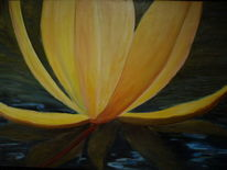 Wasser, Blüte, Gelb, Seerosen