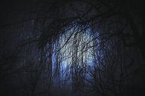 Fotografie, Lichtbilder