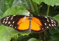 Flügel, Schmetterling, Signal, Fotografie