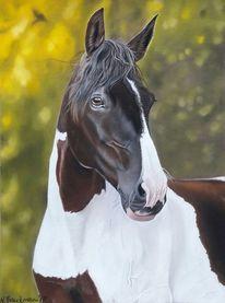 Pastellmalerei, Tierportrait, Pferde, Pferdekopf