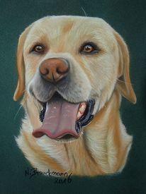Hund, Pastellmalerei, Realismus, Tiermalerei