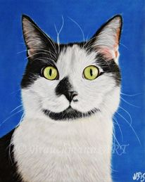Kater, Tiere, Pastellmalerei, Realismus