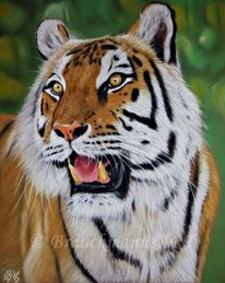 Katze, Tiger, Tierwelt, Zoo