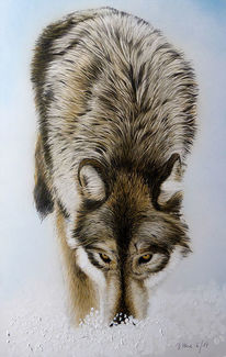 Acrylmalerei, Grafit, Tiere, Portrait