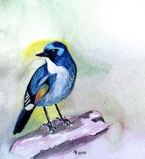 Vogel, Äste, Malerei, Aquarell