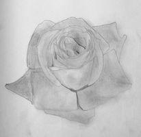 Rose, Zeichnung, Zeichnungen