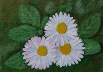 Pflanzen, Gänseblümchen, Landschaft, Blumen