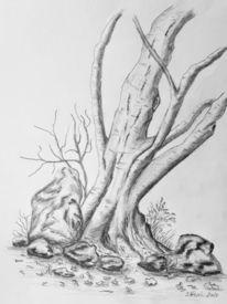 Baum, Stein, Herbst, Winter