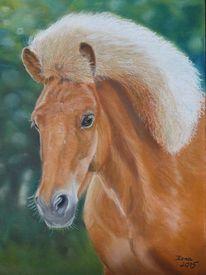 Pastellmalerei, Pony, Tierportrait, Isländer